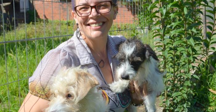 Projeto aprovado em Parobé ajusta lei municipal maus-tratos aos animais