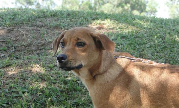 Mais de 70 cães estão à espera de um novo lar em Sapiranga