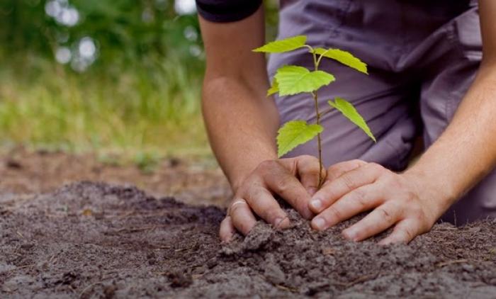 Projeto de arborização é promovido em Rolante