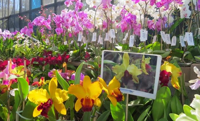 Mostra de orquídeas é realizada na região