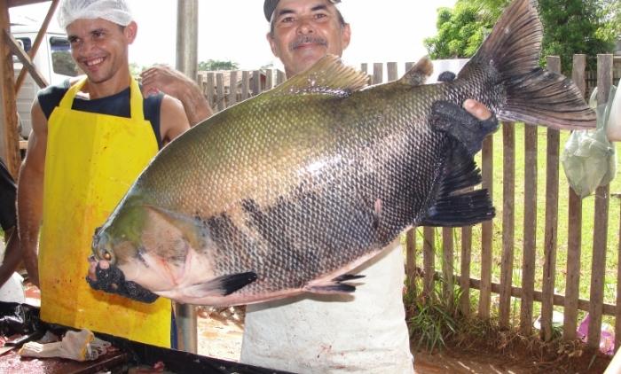 Feira do Peixe é destaque no Vale do Paranhana