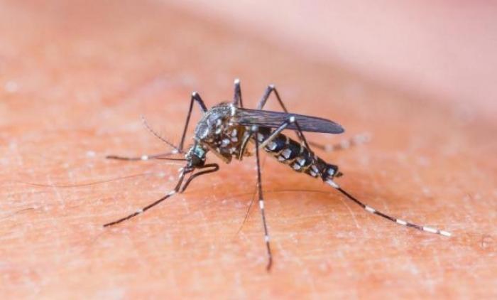 Porto Alegre registra 67 casos de dengue